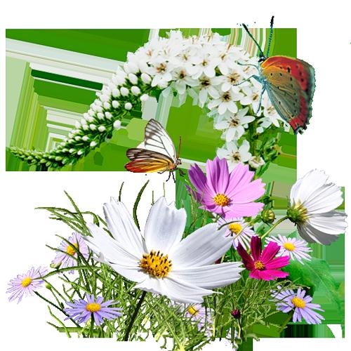 tubes_fleurs_tiram_567