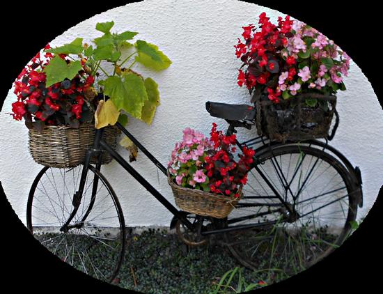 tubes_fleurs_tiram_496
