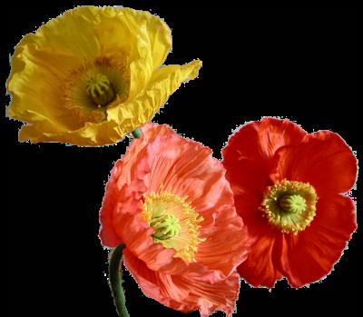 tubes_fleurs_tiram_854