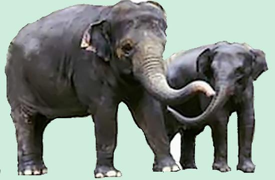 tubes_elephants_tiram_221