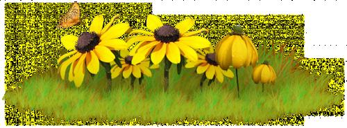 fleurs_paques_tiram_50