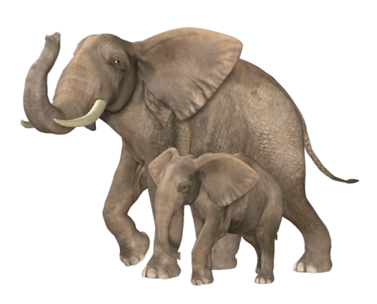 tubes_elephants_tiram_140