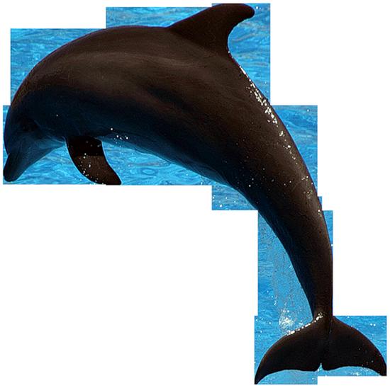 tubes_dauphins_tiram_137