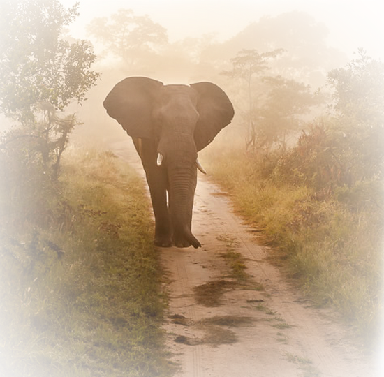 tubes_elephants_tiram_411