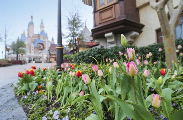 Shanghai Disneyland (2016) - Le Parc en général - Page 39 SDL7