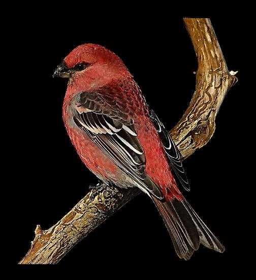 tubes_oiseaux_tiram_141
