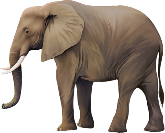 tubes_elephants_tiram_50