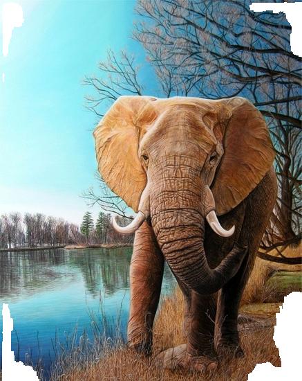 tubes_elephants_tiram_398