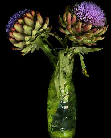 tubes_fleurs_tiram_840