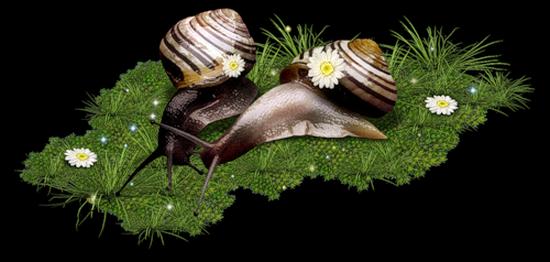 tubes_escargots_tiram_75