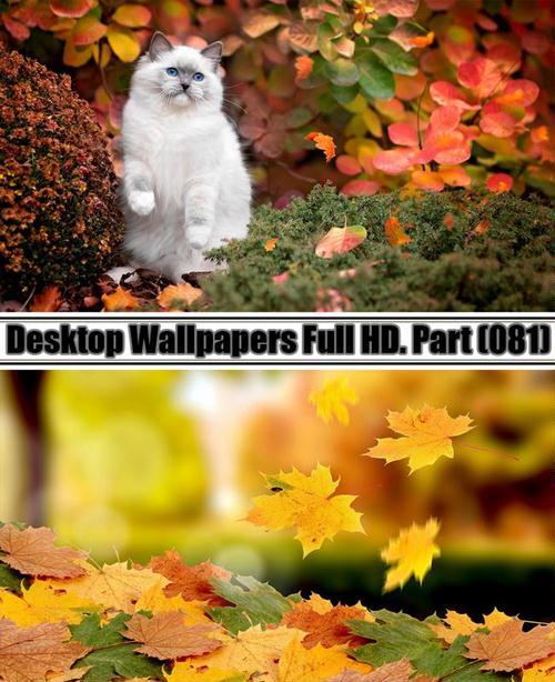 Desktop Wallpapers  HD. Part 81