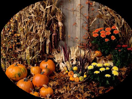 paysage-halloween-0