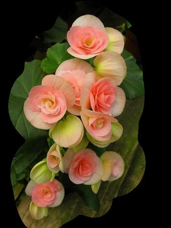 tubes_fleurs_tiram_902