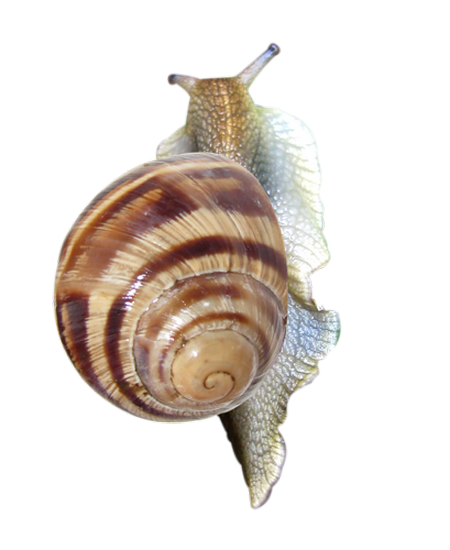 tubes_escargots_tiram_208