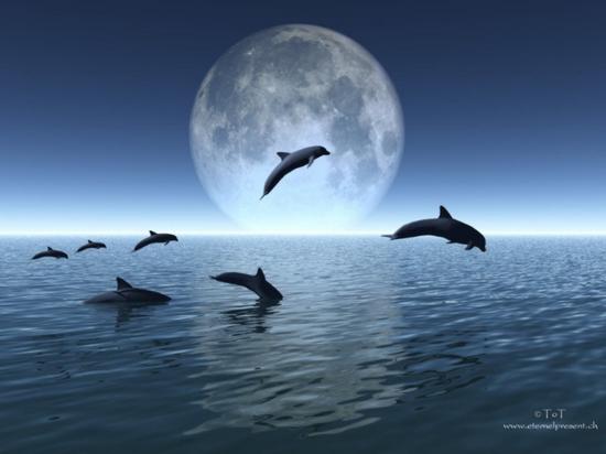 tubes_dauphins_tiram_192