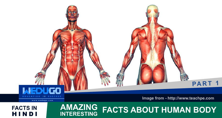 Amazing Interesting facts about Human Body Part 1 in Hindi