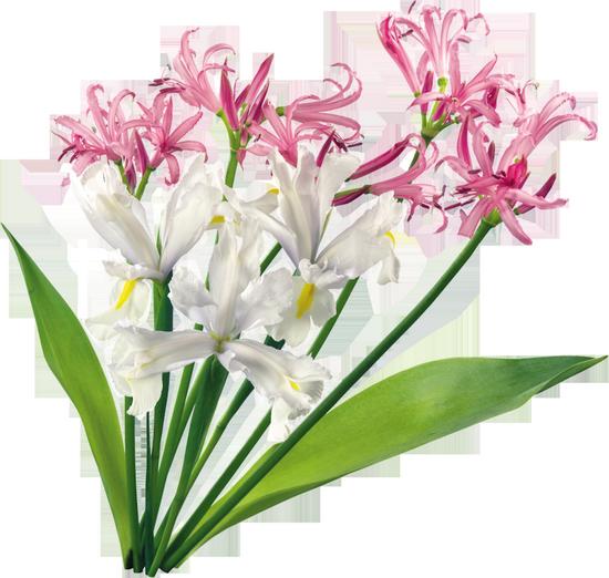 tubes_fleurs_tiram_161
