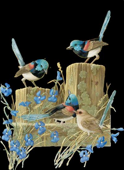 tubes_oiseaux_tiram_106