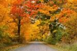 autumn-1010386-340.jpg