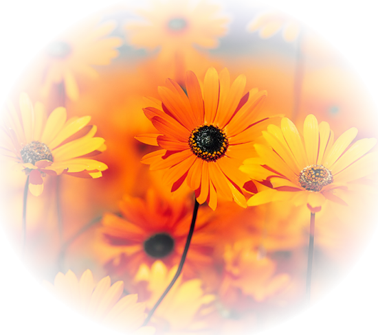 tubes_fleurs_tiram_184