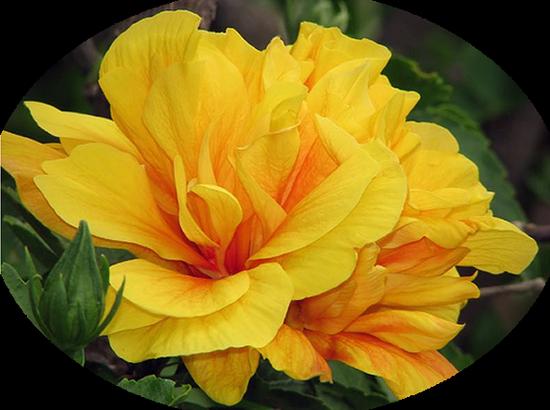 tubes_fleurs_tiram_183