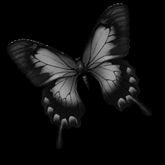tubes_papillon_tiram_685