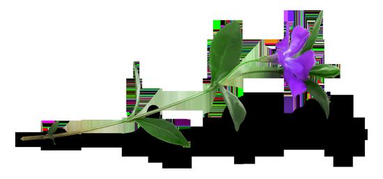 tubes_fleurs_tiram_455