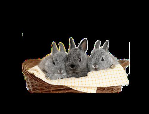 lapins_paques_tiram_49