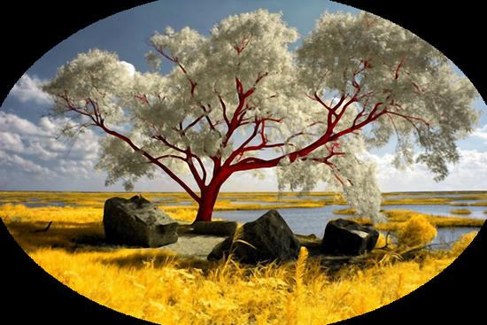 paysage_tiram_404