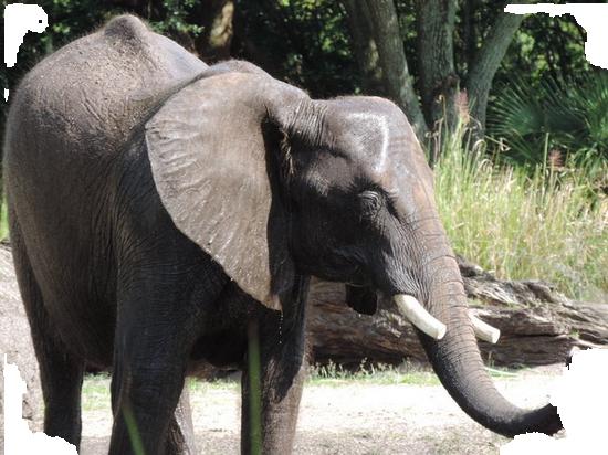 tubes_elephants_tiram_452