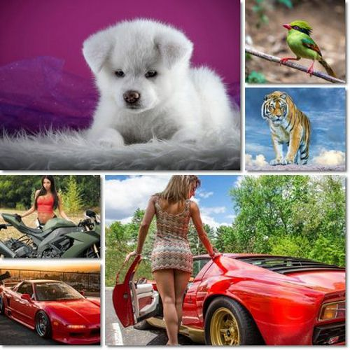 Beautiful Wallpapers Pack 1159
