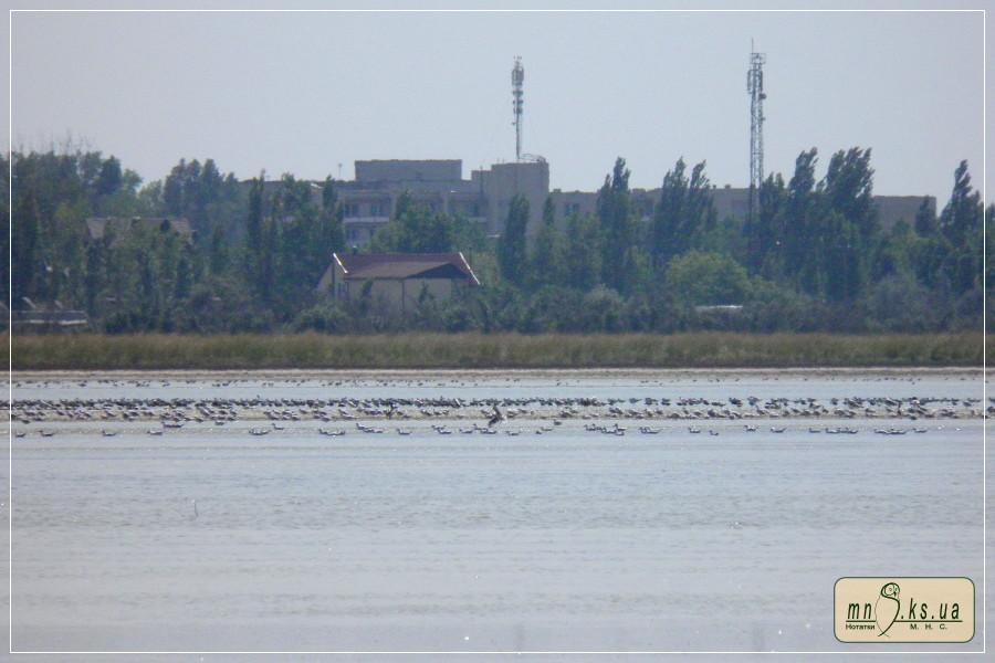 Озеро Кефальне, 4 серпня 2015 р.