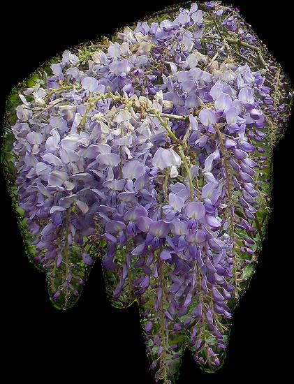 tubes_fleurs_tiram_197