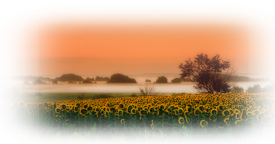 paysage_tiram_55