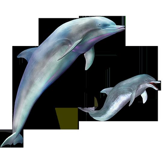 tubes_dauphins_tiram_131
