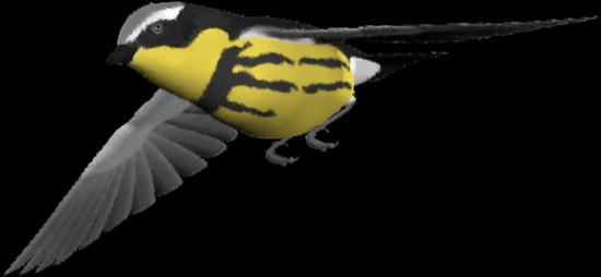 tubes_oiseaux_tiram_218