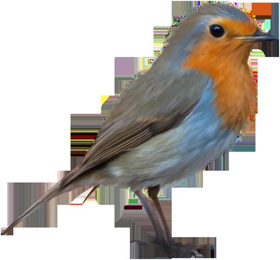 tubes_oiseaux_tiram_1