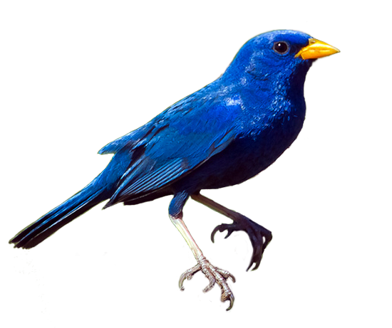 tubes_oiseaux_tiram_34