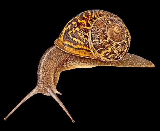 tubes_escargots_tiram_167