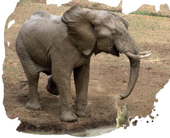 tubes_elephants_tiram_80