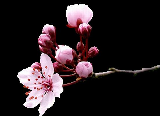 tubes_fleurs_tiram_290
