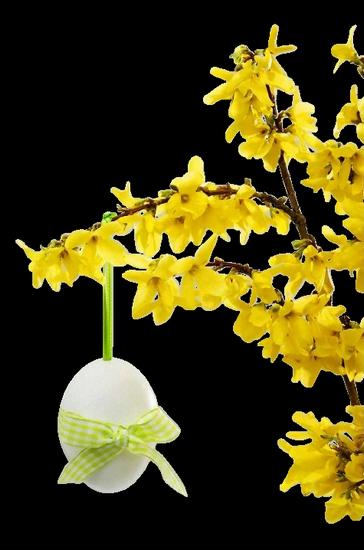 fleurs_paques_tiram_10