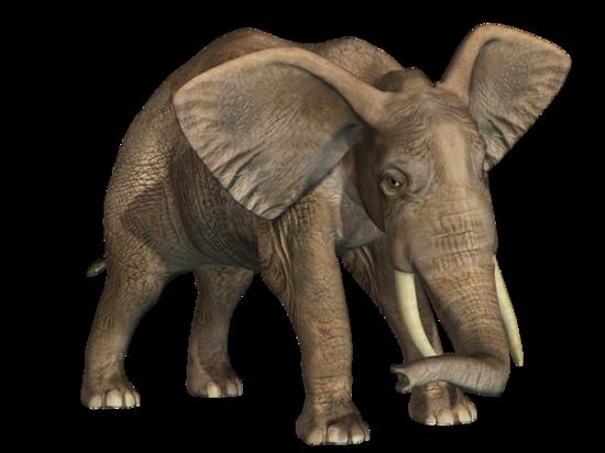 tubes_elephants_tiram_287