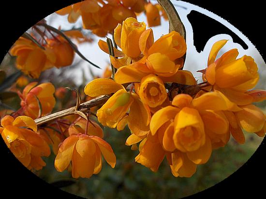 tubes_fleurs_tiram_198