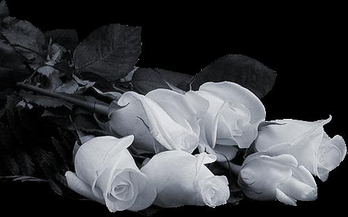 tubes_fleurs_tiram_659
