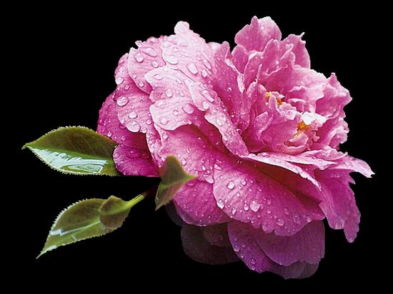 tubes_fleurs_tiram_316
