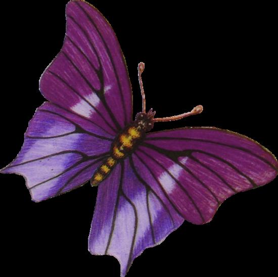 tubes_papillon_tiram_168