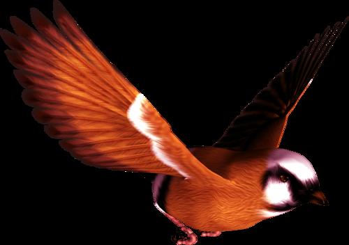 tubes_oiseaux_tiram_2