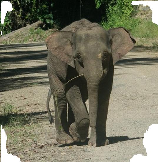 tubes_elephants_tiram_2