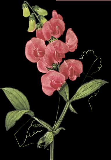 tubes_fleurs_tiram_537